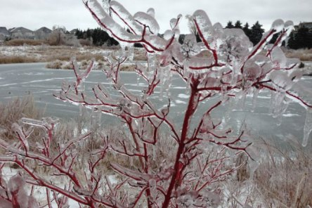 Taken from Global's Photo Gallery (here) of the Toronto Ice Storm
